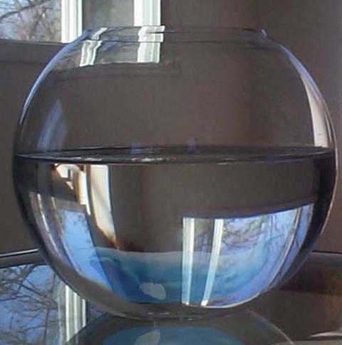glassbowlbelugagoogle.jpg